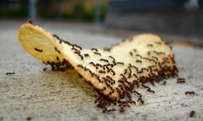 ants-666x399